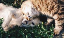 friends-cat-and-dog-cats-and-dogs